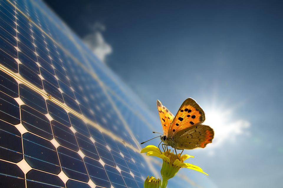 Schmetterlink auf Blume vor Solarzellen